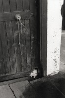 http://nikstrangelove.com/files/gimgs/th-15_Dog Door_v2.jpg