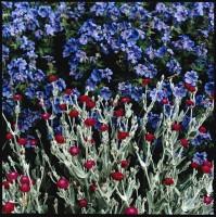 http://nikstrangelove.com/files/gimgs/th-15_FlowersWestowPark2020.jpg