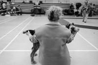 http://nikstrangelove.com/files/gimgs/th-20_dogshow.jpg