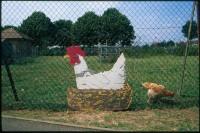 http://nikstrangelove.com/files/gimgs/th-52_Chicken&Sign_v2.jpg