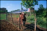 http://nikstrangelove.com/files/gimgs/th-52_Cow&Train_v2.jpg
