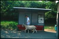 http://nikstrangelove.com/files/gimgs/th-52_Goat&BusStop_v2.jpg