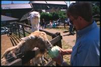 http://nikstrangelove.com/files/gimgs/th-52_GoatFeeding_v2.jpg