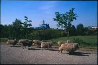 http://nikstrangelove.com/files/gimgs/th-52_Sheep&CanaryWharf_v2.jpg
