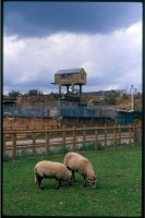 http://nikstrangelove.com/files/gimgs/th-52_Sheep&RailHut_v2.jpg
